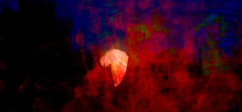 Hanging Leaf 2013